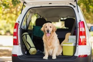 How Do I Move with My Dog or Cat?: Pet Relocation Made Easy