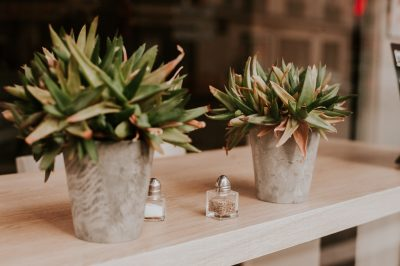 Packing and moving house plants like these succulents? Check out our tips!