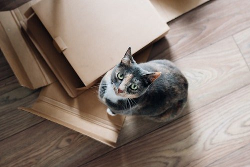 Cat sitting on moving boxes