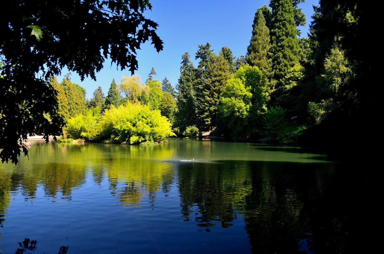 Moving to Portland Oregon - Laurelhurst Neighborhood