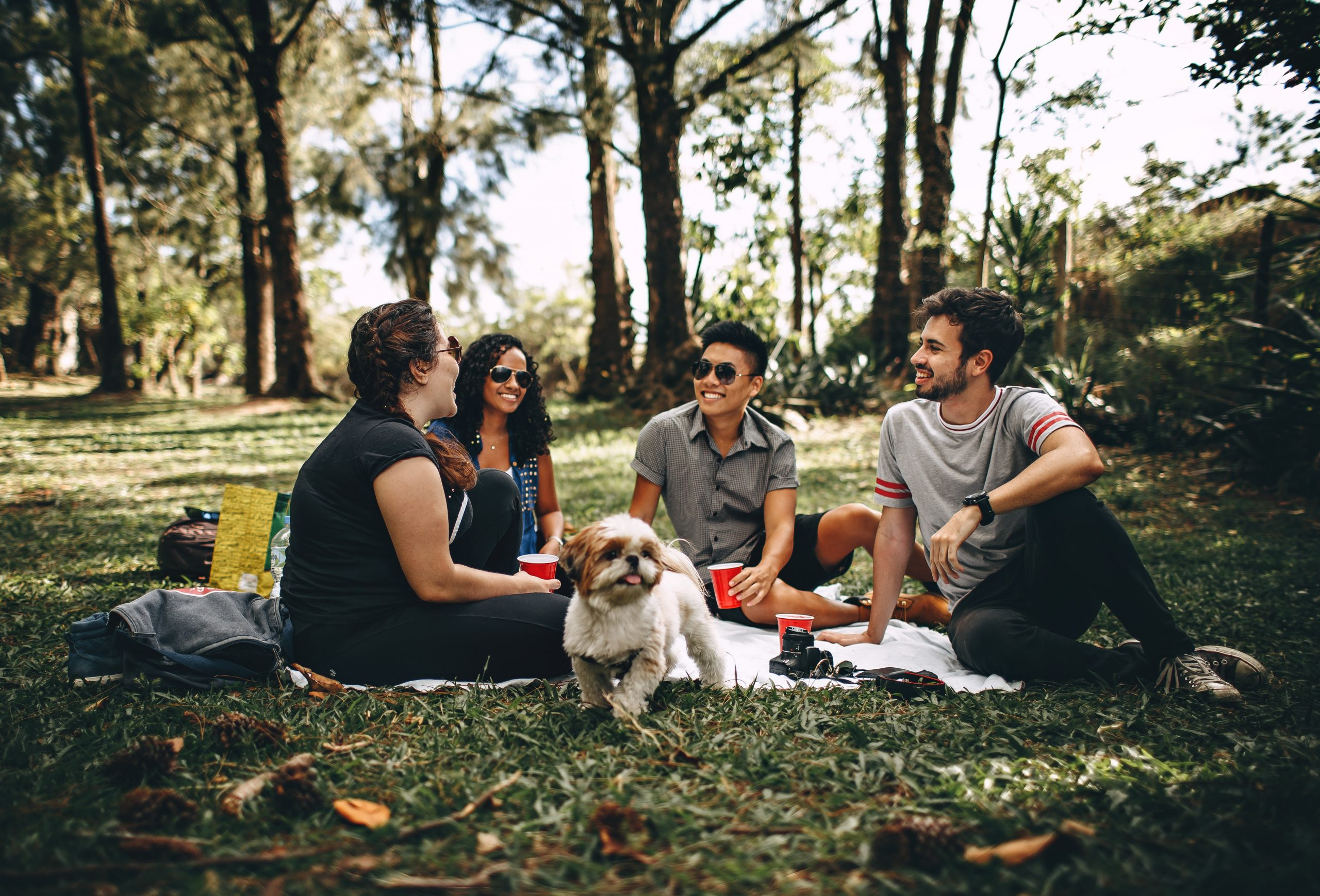 Four people and a dog having a picnic in a sunny park, on the grass.